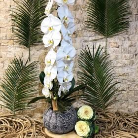Phalaenopsis Orkide Beyaz}