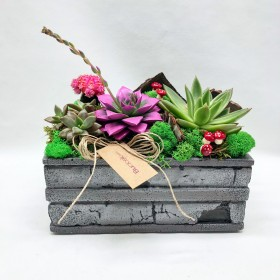 Succulent  Beyaz Karanfil}