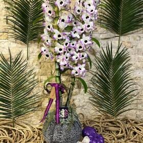 Dendrobium (Bambu) Orkide}