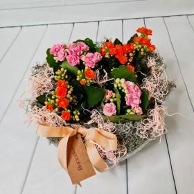 Kalanchoe (Kalanşo) Çiçeği}